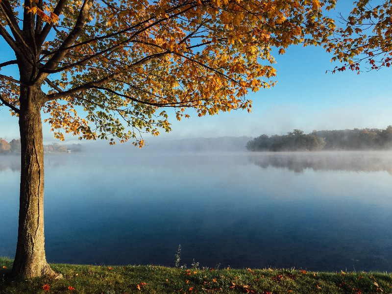 lake with tree in fall