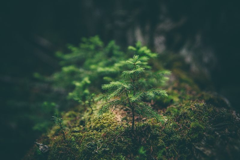 small tree in forest
