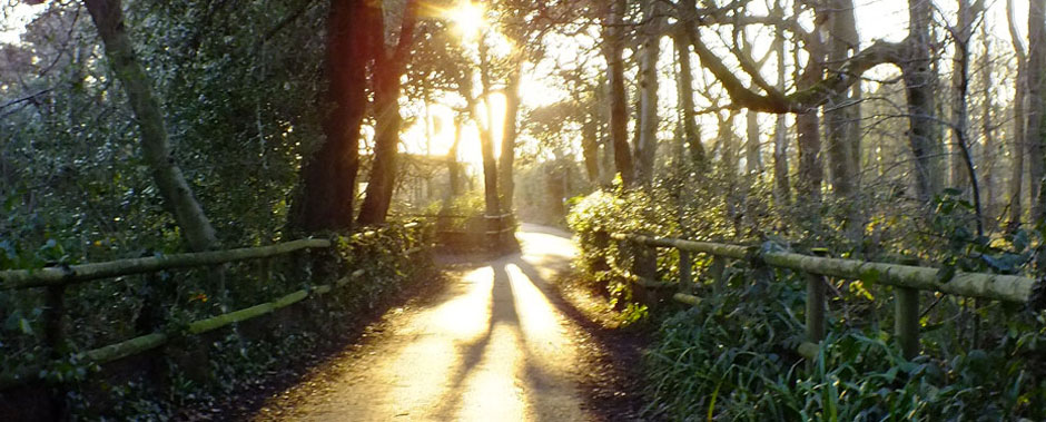 Sunlit walk at Highcliffe Castle