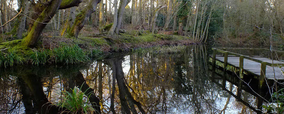 Pond at Highcliffe Castle