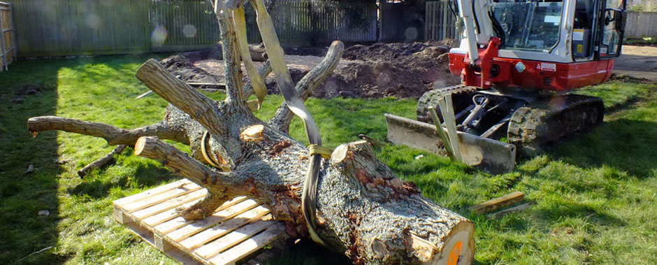 Moving dead tree at Sovereign Housing Association