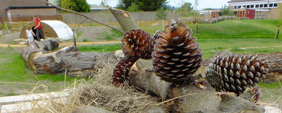 Large logs at Turlin Moor Community School