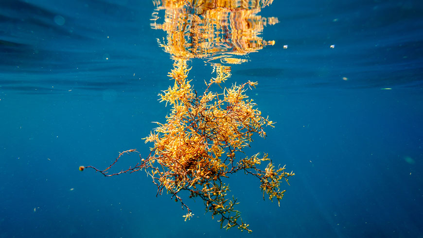 Is Sargassum really a problem for investors?