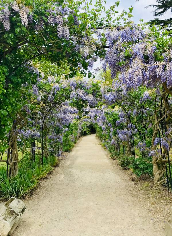 garden path with purple flowers overhanging
