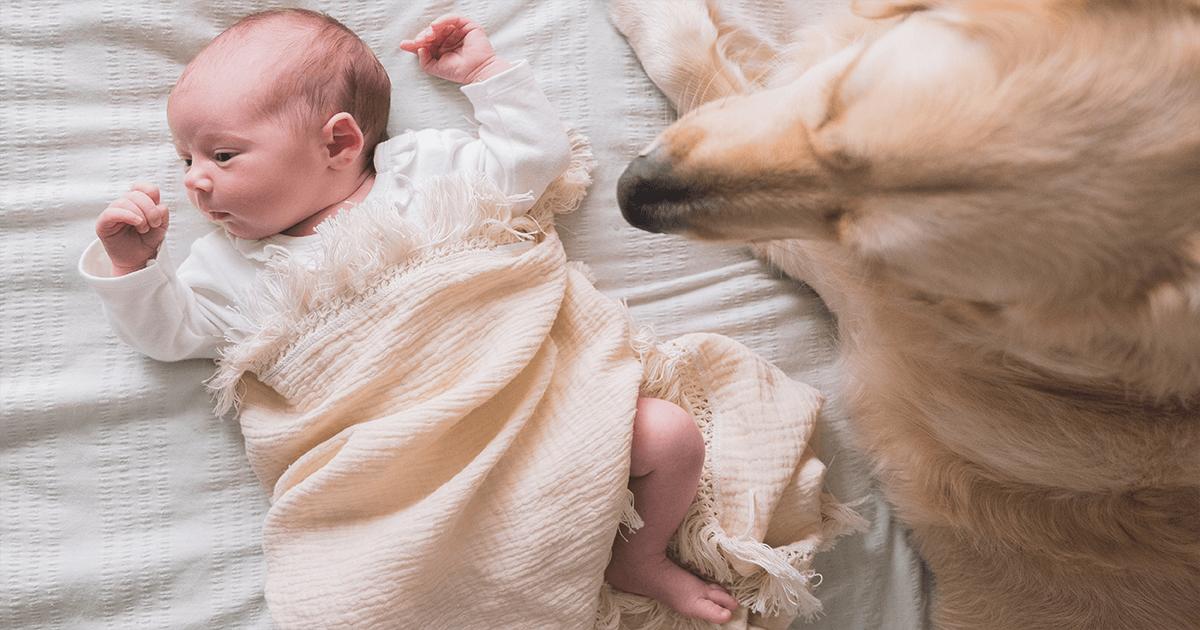 Dog sitting next to newborn baby