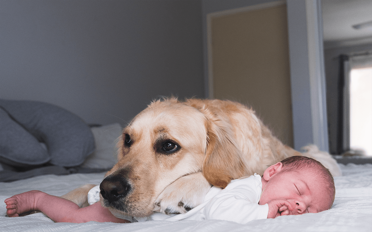 dog resting head on baby's back