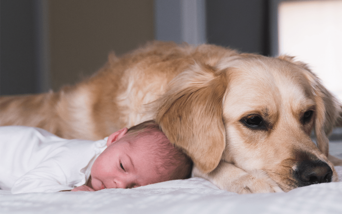 Dog and Baby lying next to each other