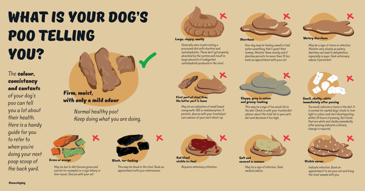 What is your dogs poo telling you infographic