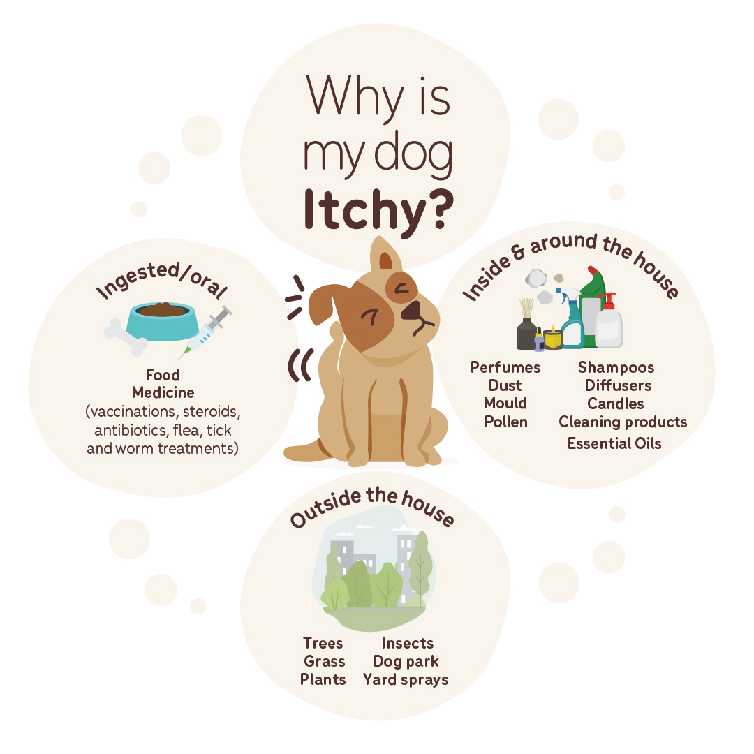 Why is my dog itchy diagram
