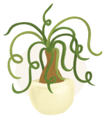 ponytail palm plant illustration