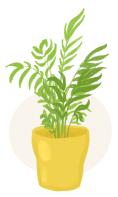 parlor palm plant illustration