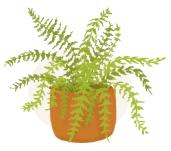 boston fern plant illustration