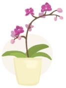 orchid plant illustration