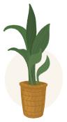 cast iron plant illustration