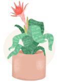 bromeliad plant illustration
