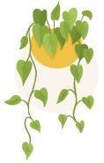 devil's ivy plant illustration