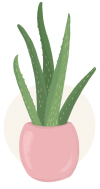 aloe vera plant illustration