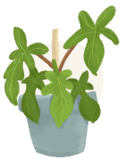 philodendron plant illustration