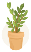 zz plant plant illustration