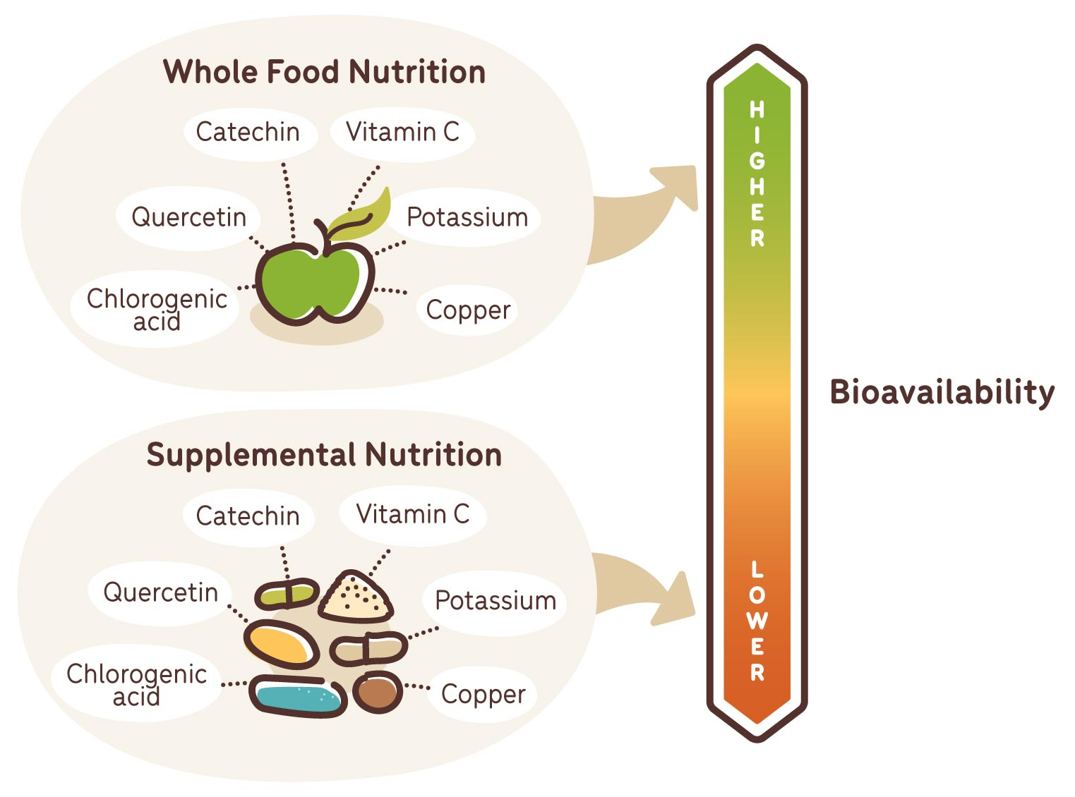 bioavailability in whole food nutrition versus supplemental nutrition