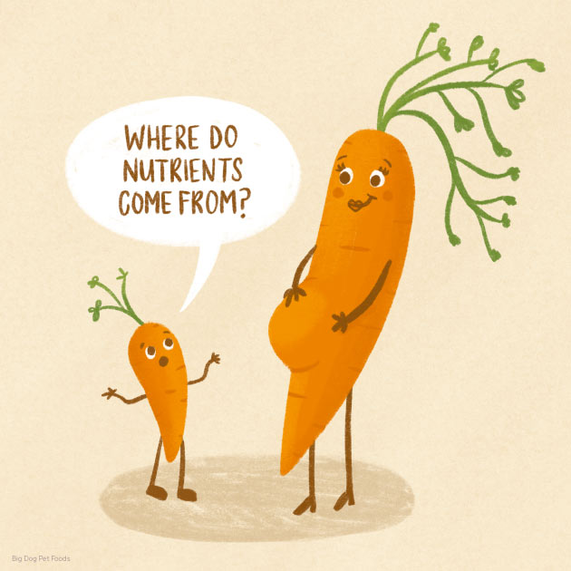 carrot nutrition mum son mother child