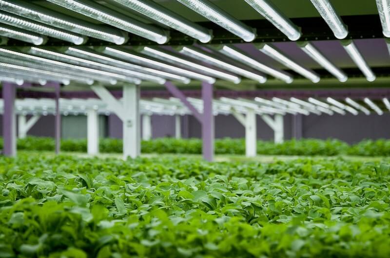 fifth season vertical farm
