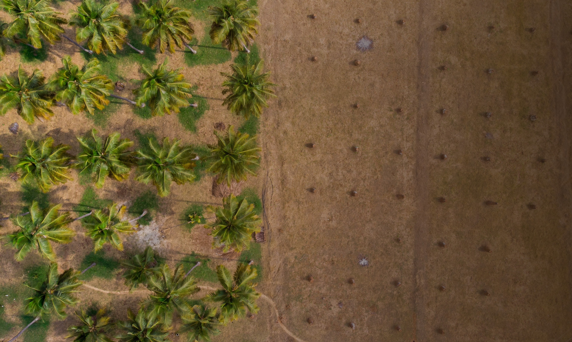 Overhead shot of a tropical jungle. Palm trees on the left and tree stumps on the right.