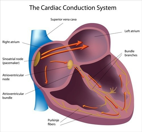 Natural Remedies for Heart Palpitations