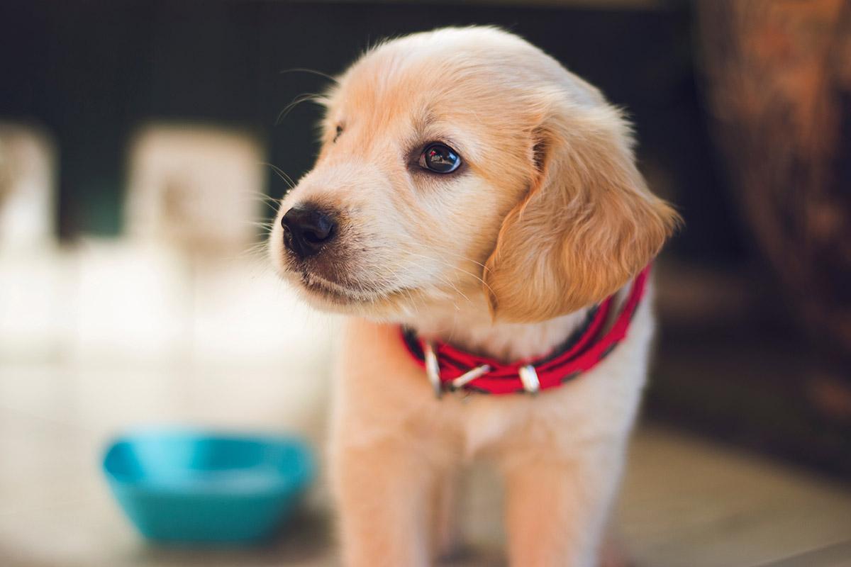 Pet Care Day next Thursday 30th January
