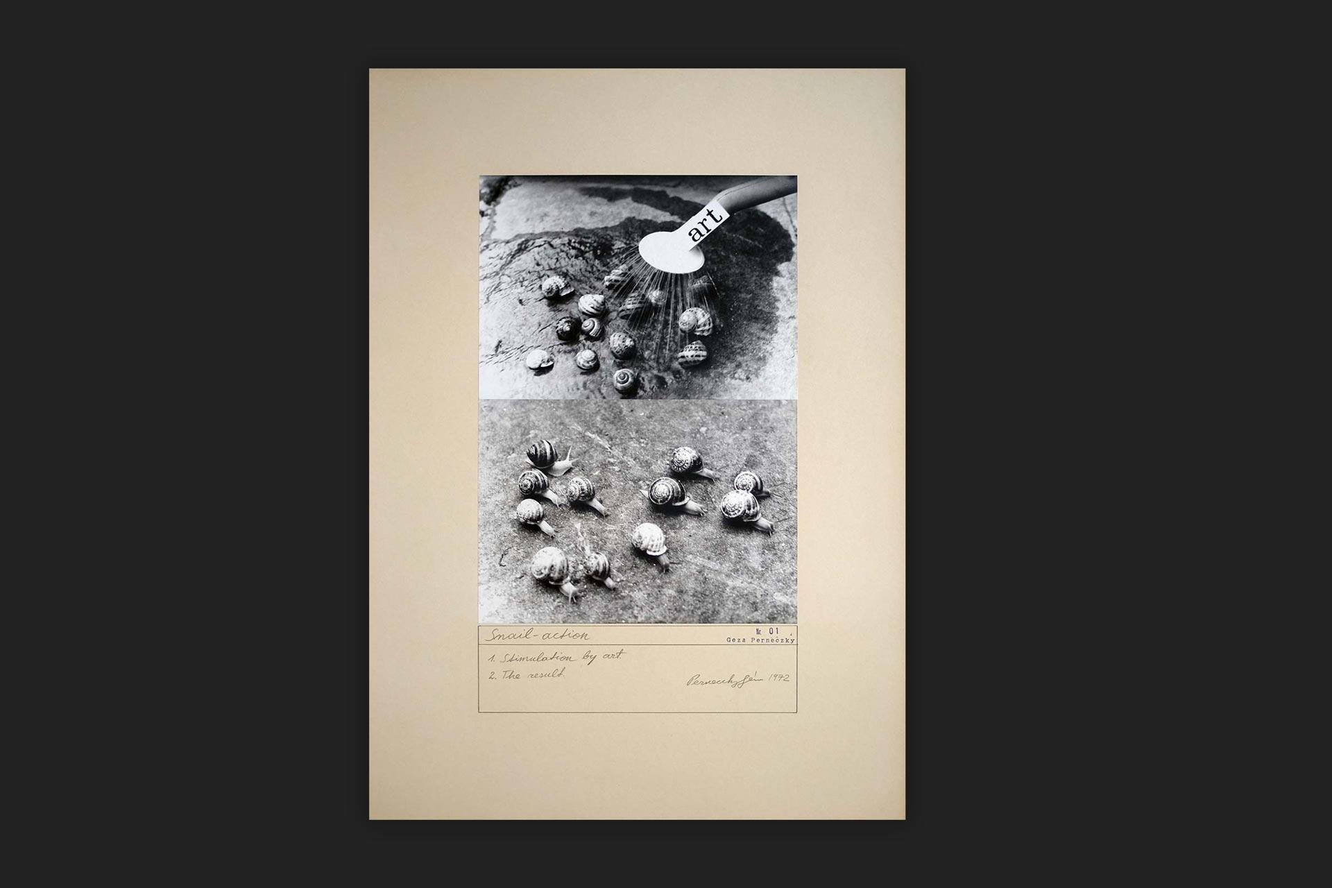 Géza Perneczky, Snail Action, 1971, Acquisition