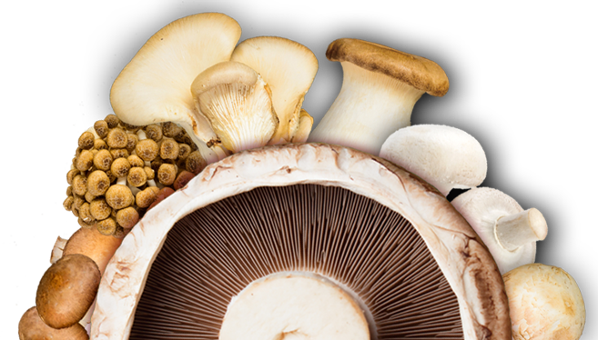 jm-farms main mushroom collection