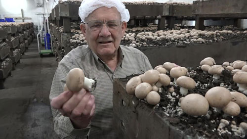 virgil-jurgensmeyer-mushrooms-thumbnail