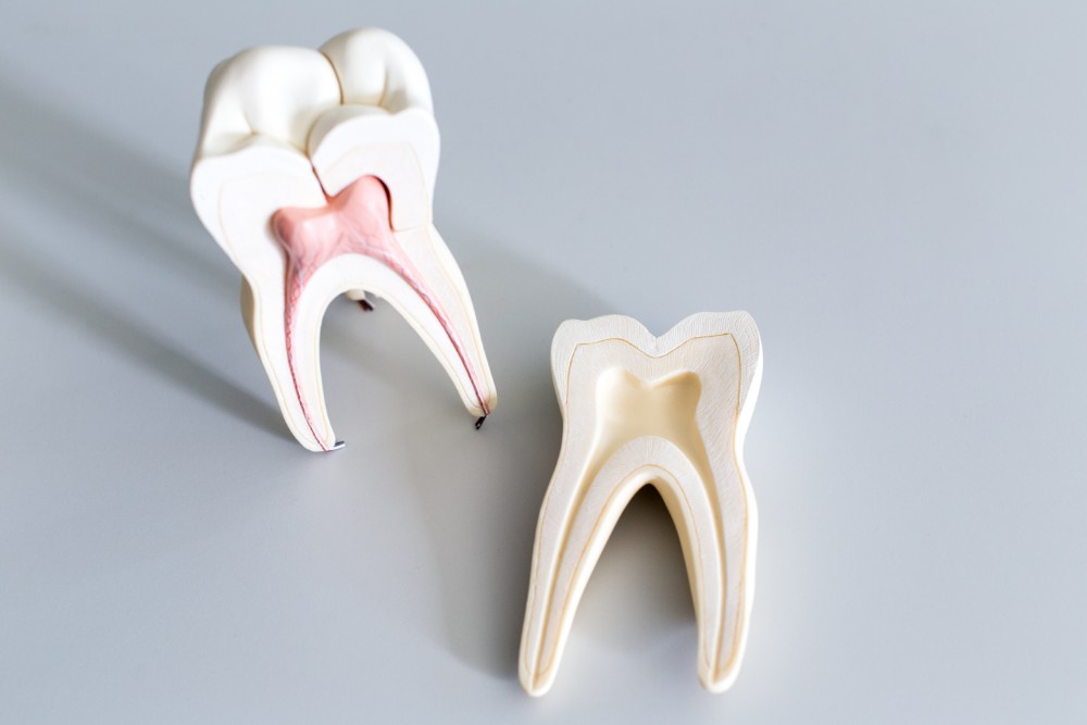 root canal shown on clay teeth models