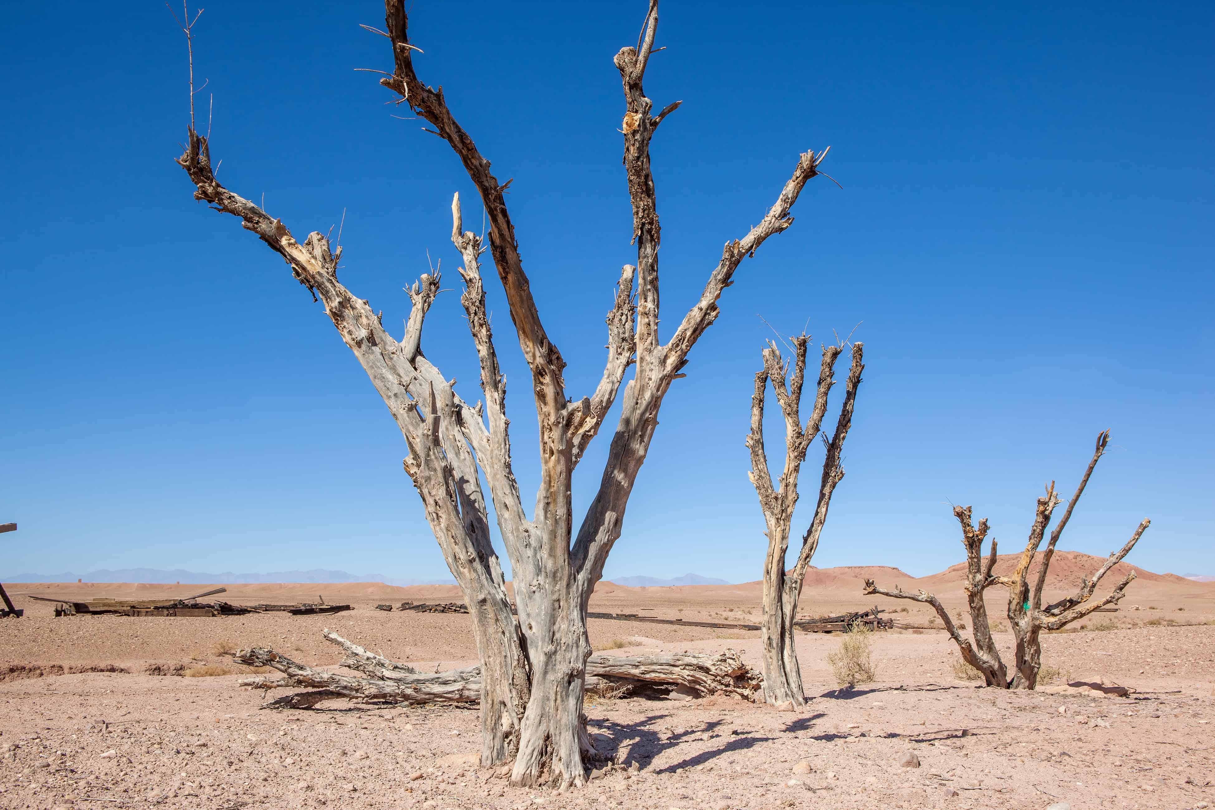 Arbres morts dans désert photographie