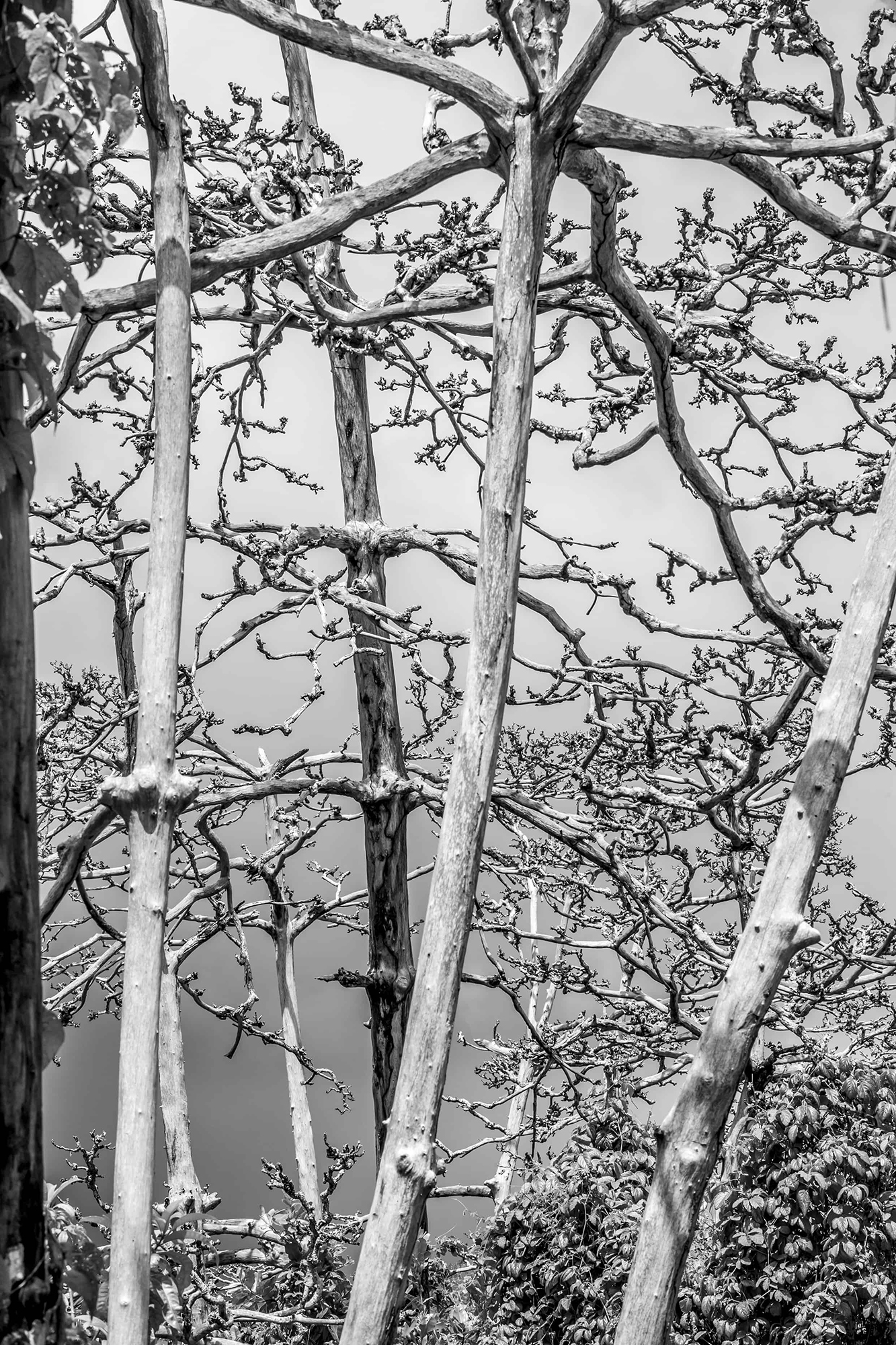 zanzibar arbres morts ciel d'orage