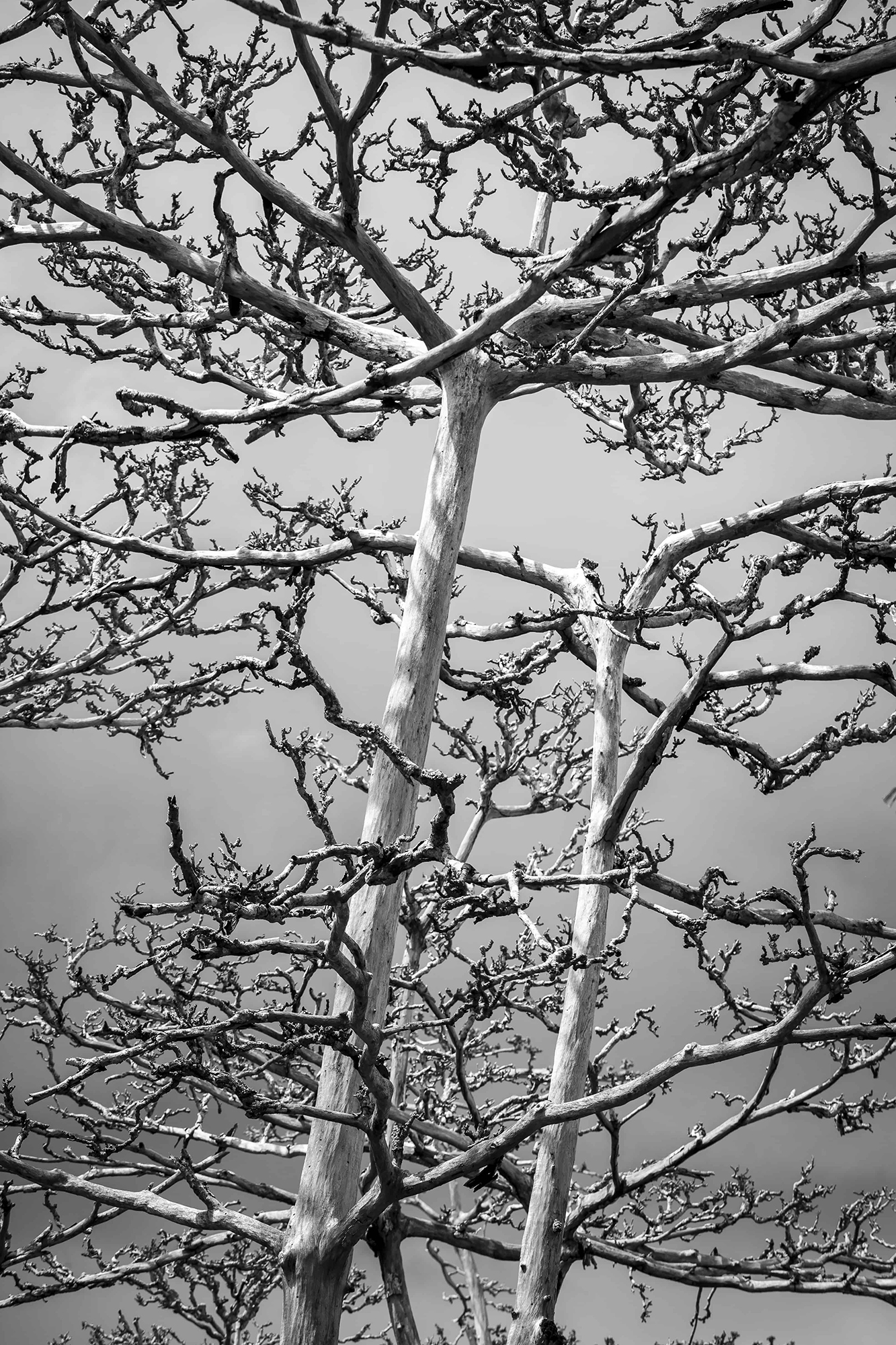 zanzibar arbres morts noir et blanc