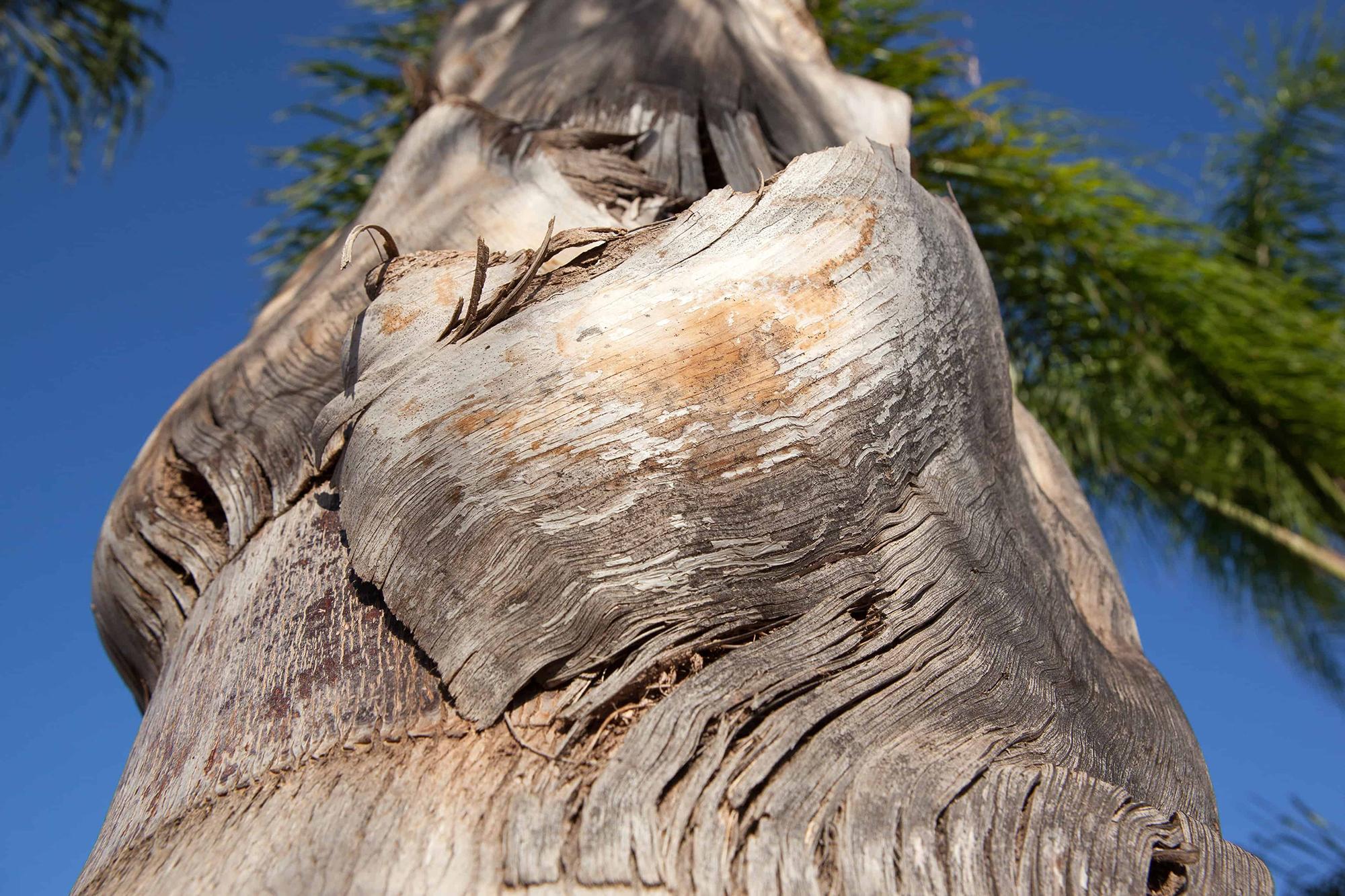 palmier contre plongee couleur serie maroc