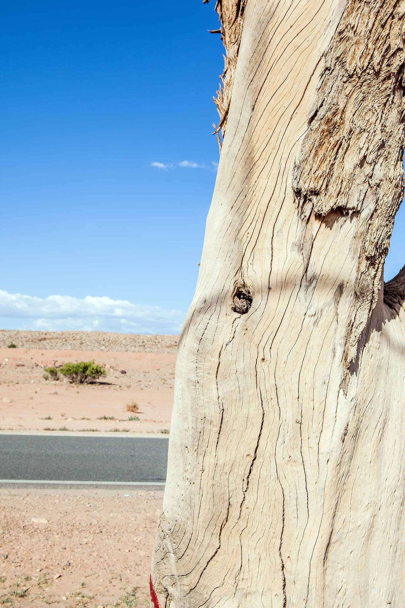 arbre mort bord de route maroc