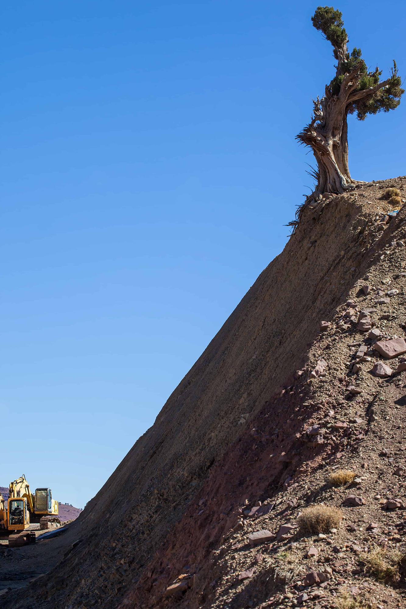 survivre arbre maroc bord de route