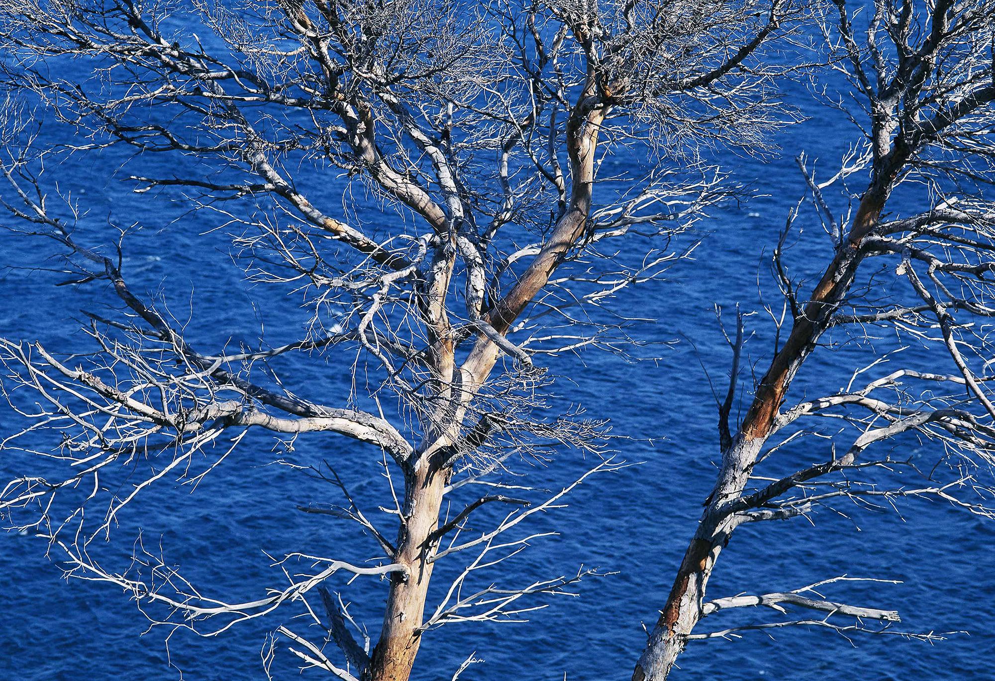 survivant duo pins au dessus des eaux var