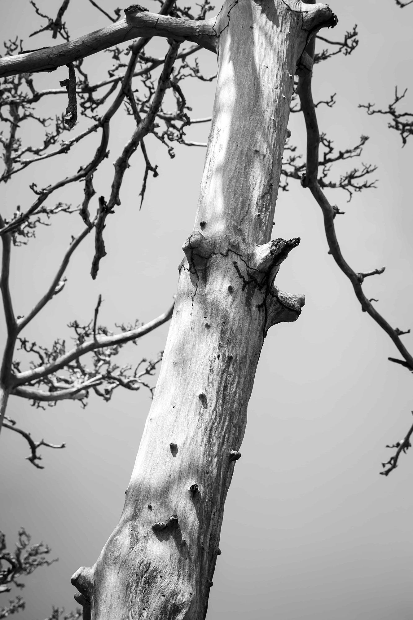 arbre détail tronc zanzibar noir et blanc