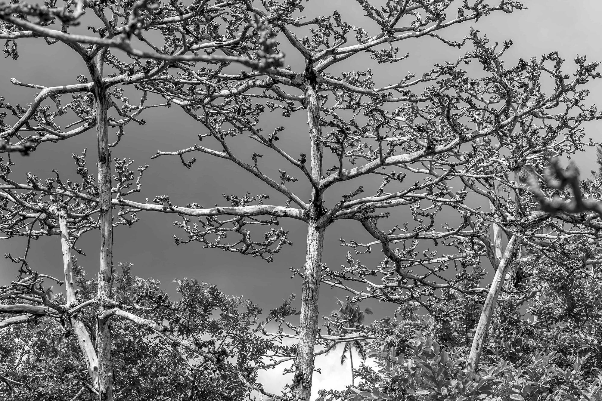 Arbres morts en noir et blanc