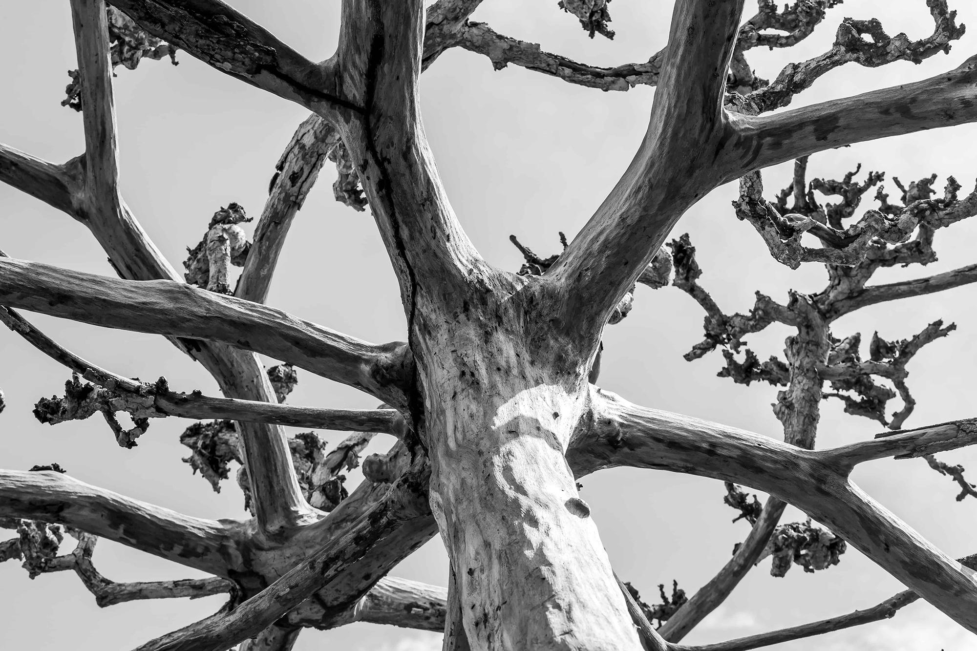 zanzibar arbre mort en noir et blanc photo professionelle