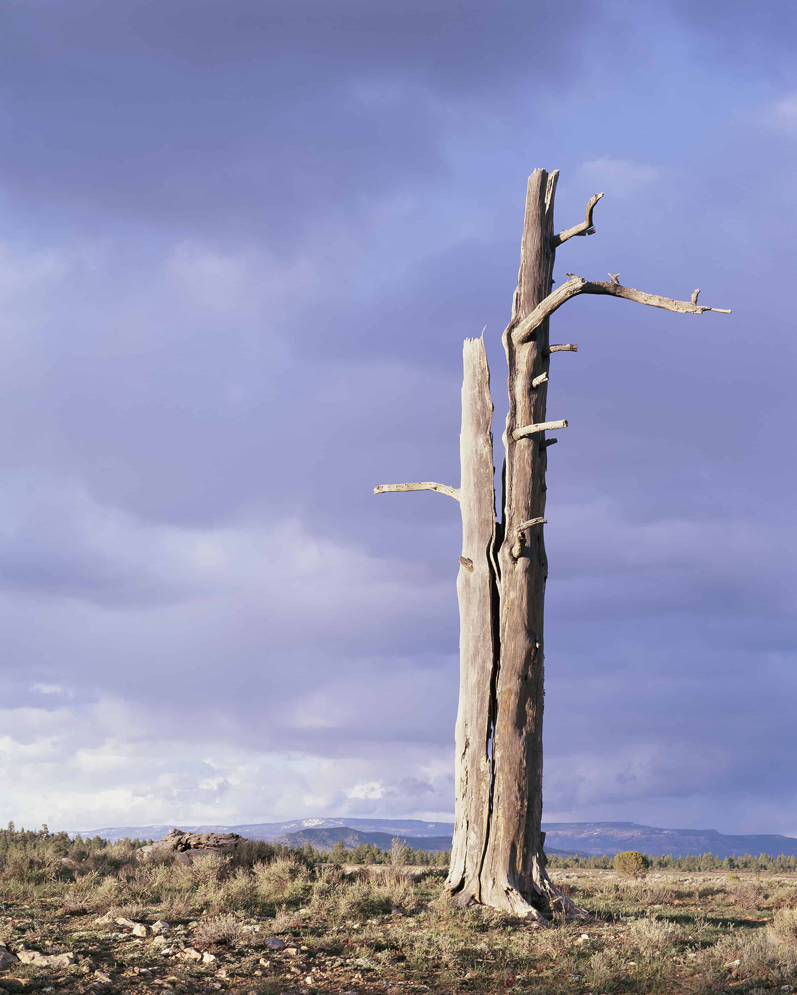 Arbre mort Colorado ciel d'orage