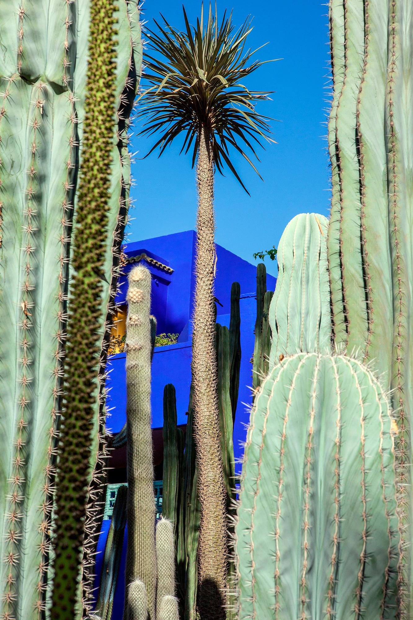entre les cactus bleu majorelle