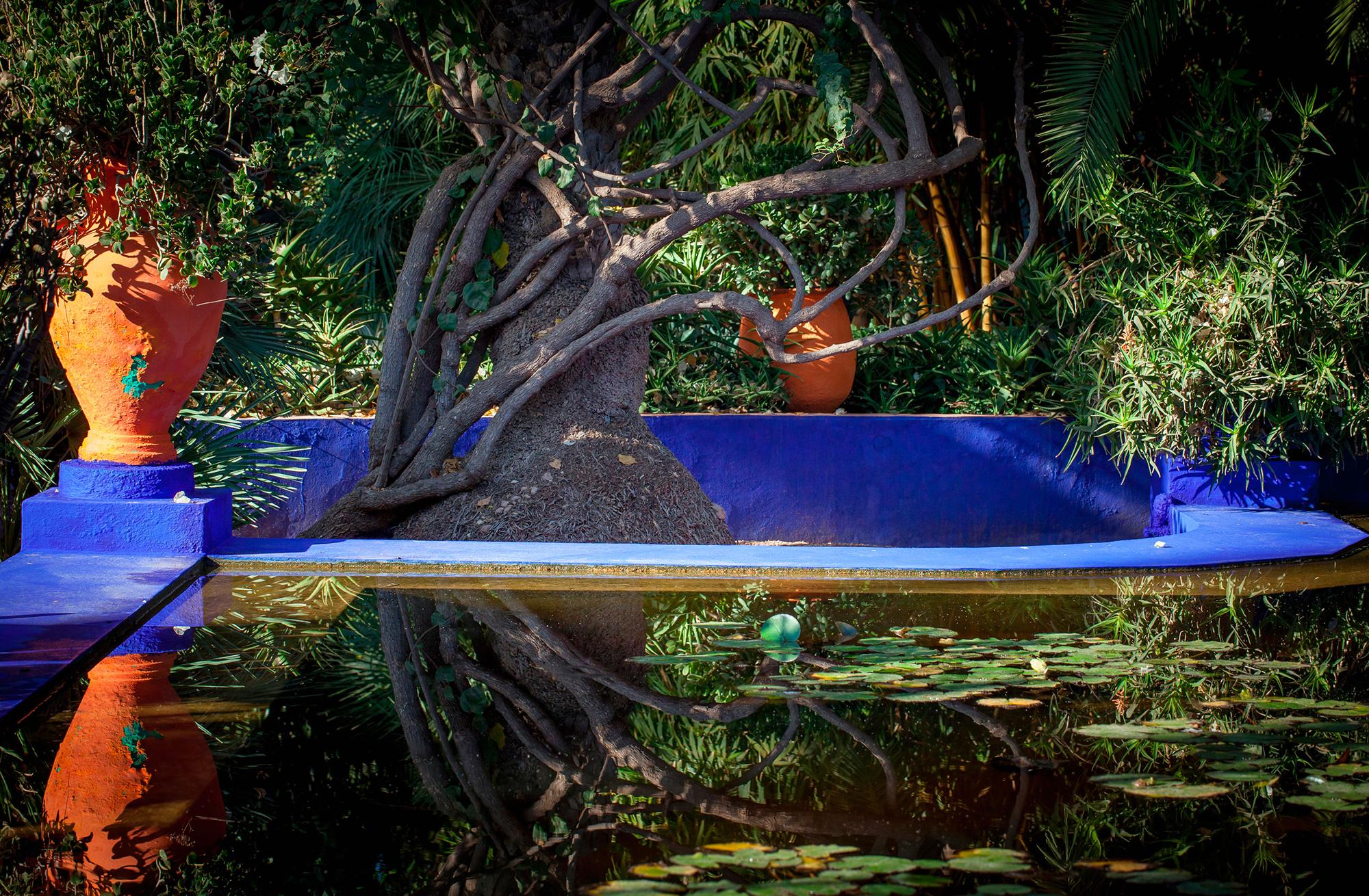 arbre jardin majorelle maroc reflet