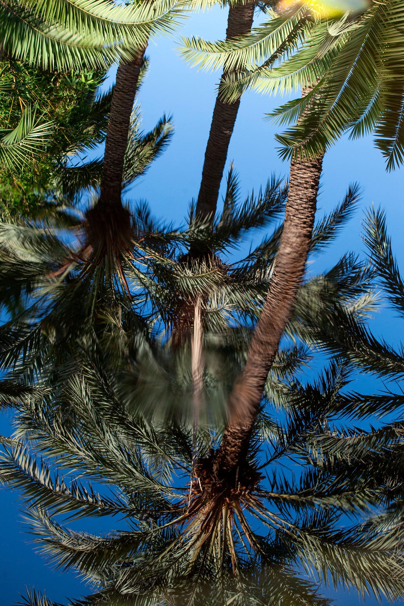 palmier reflet maroc