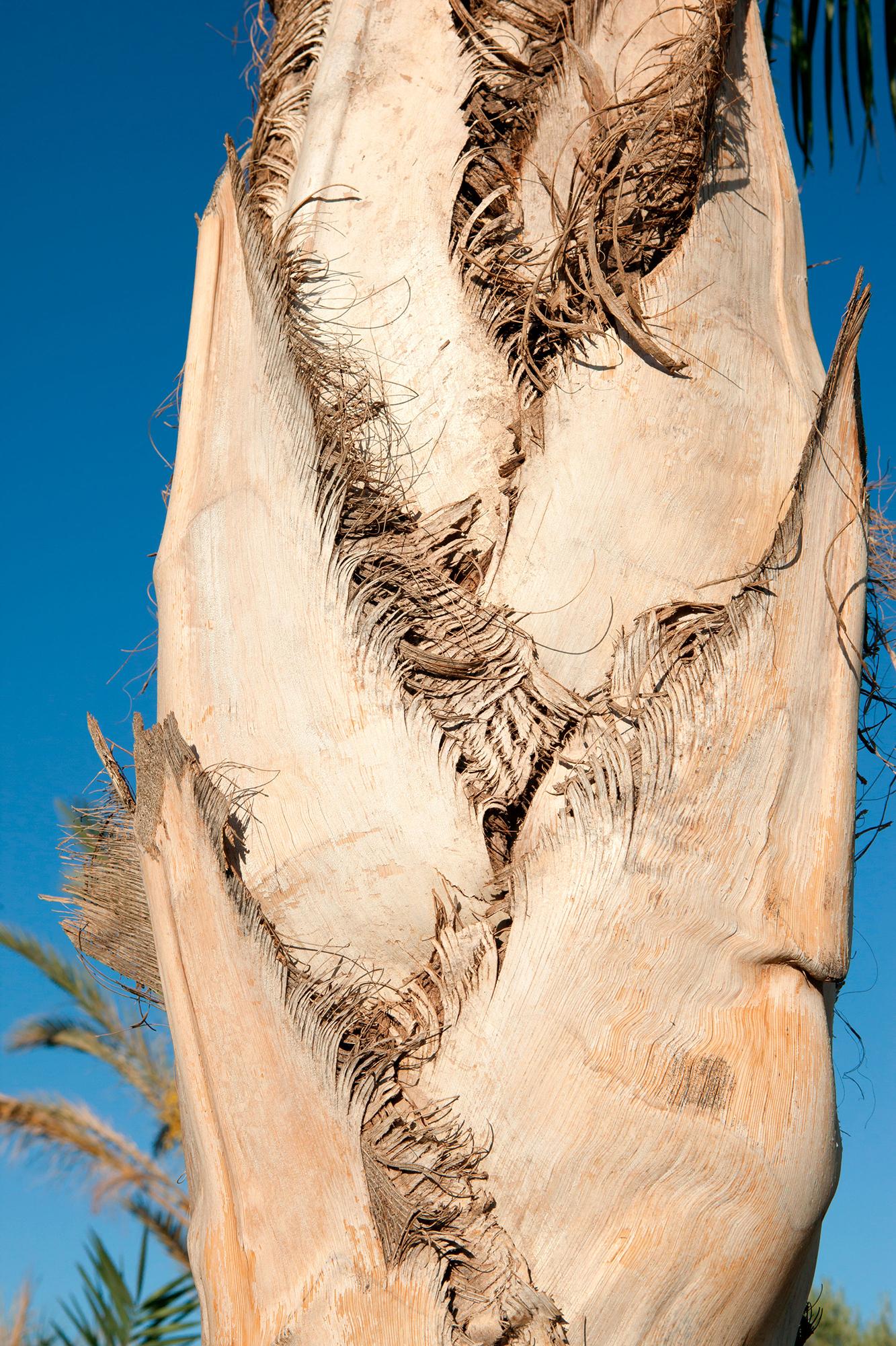 palmier couleur serie maroc