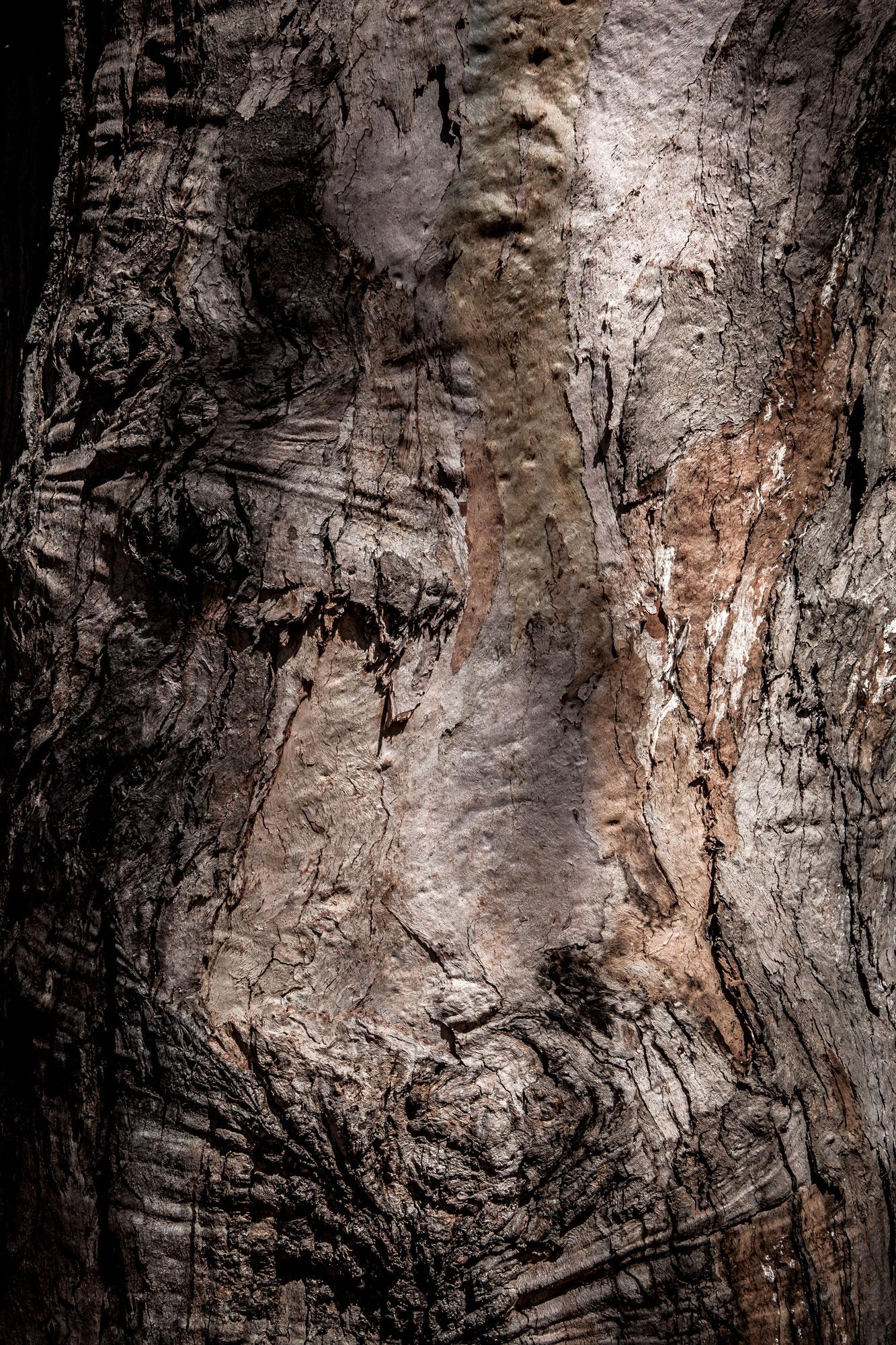 closeup tronc arbre série