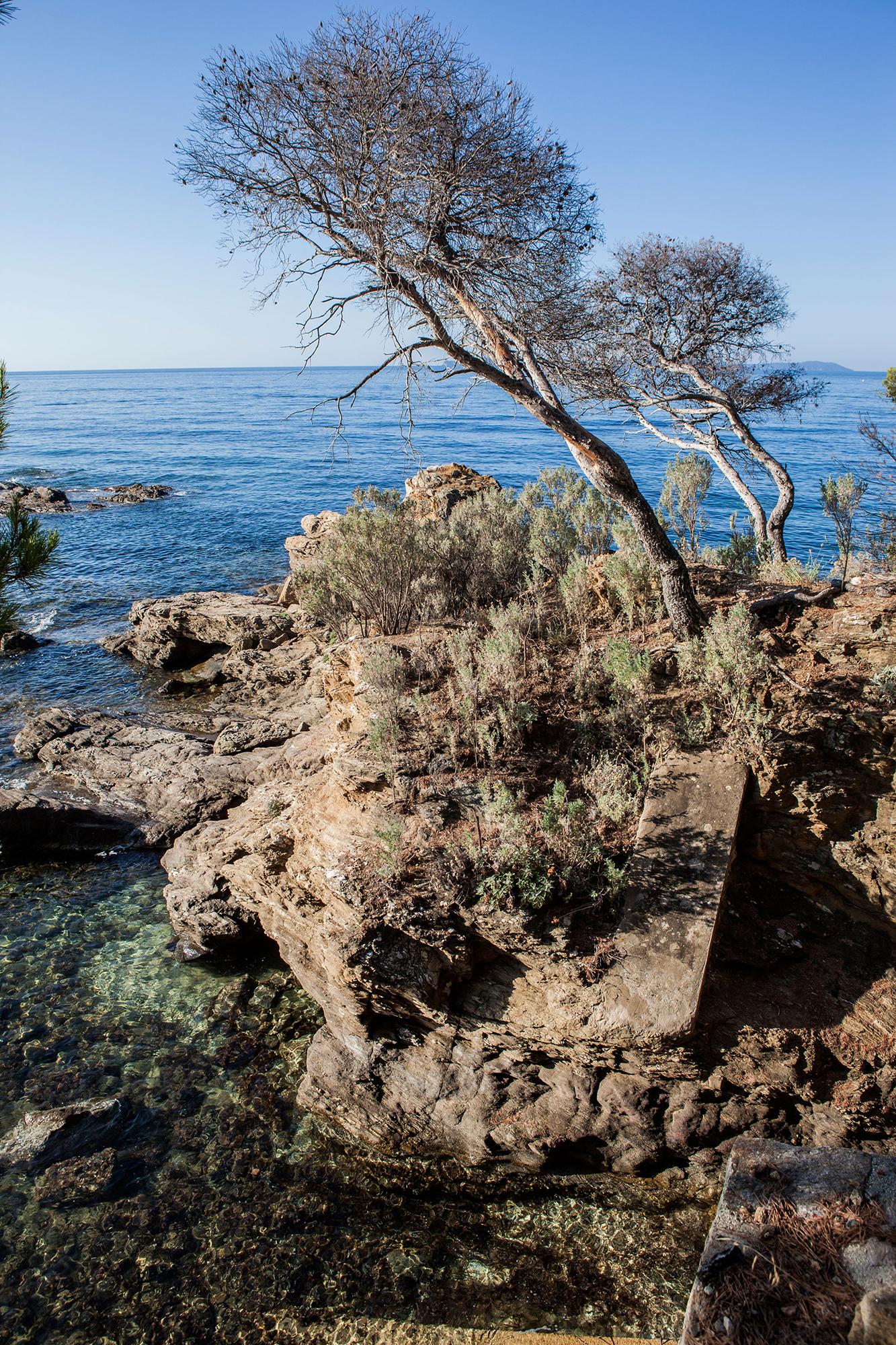 vue pins agonisants var Méditerrannée